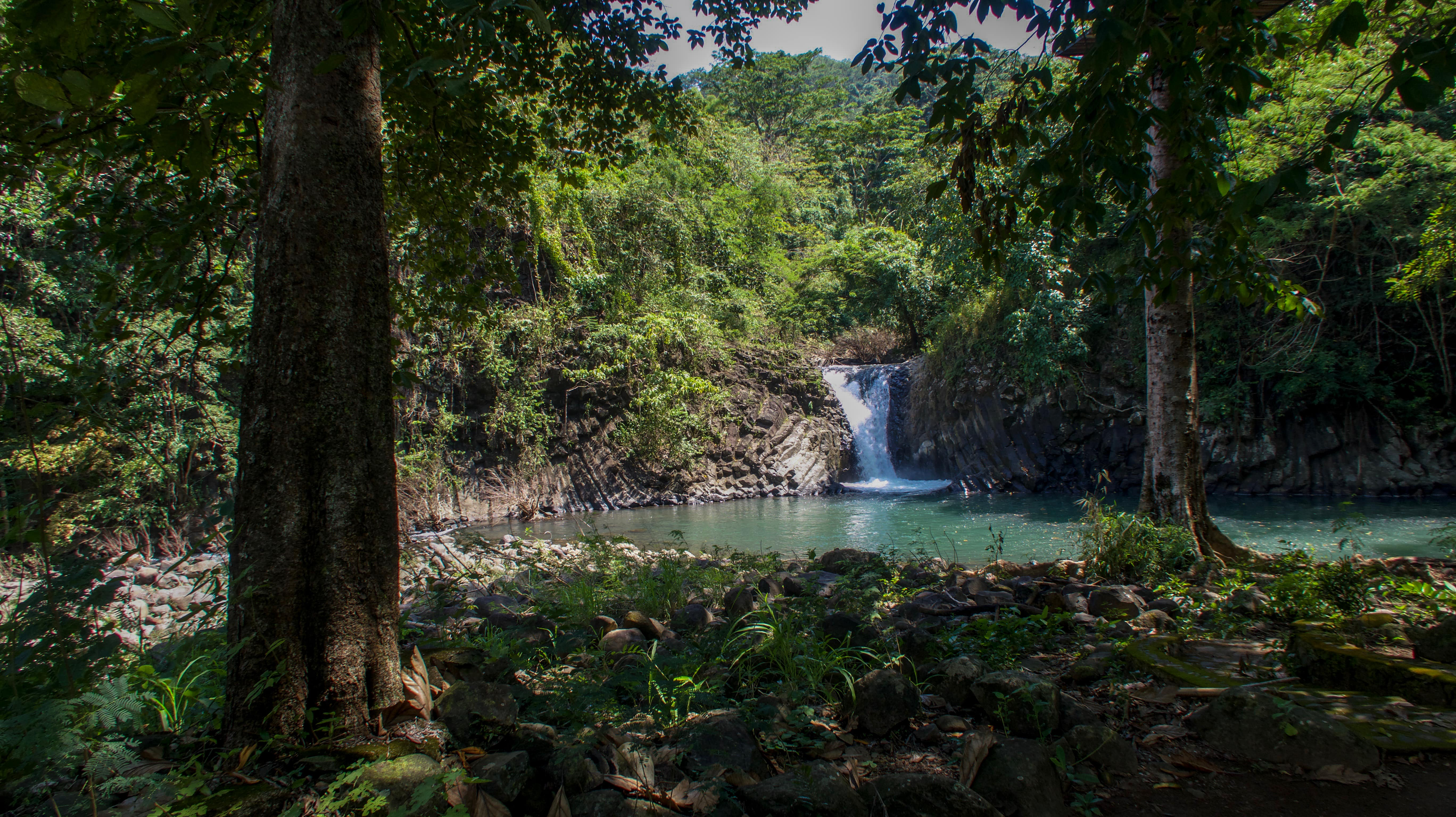 dunsulan falls and trees in bataan philippines