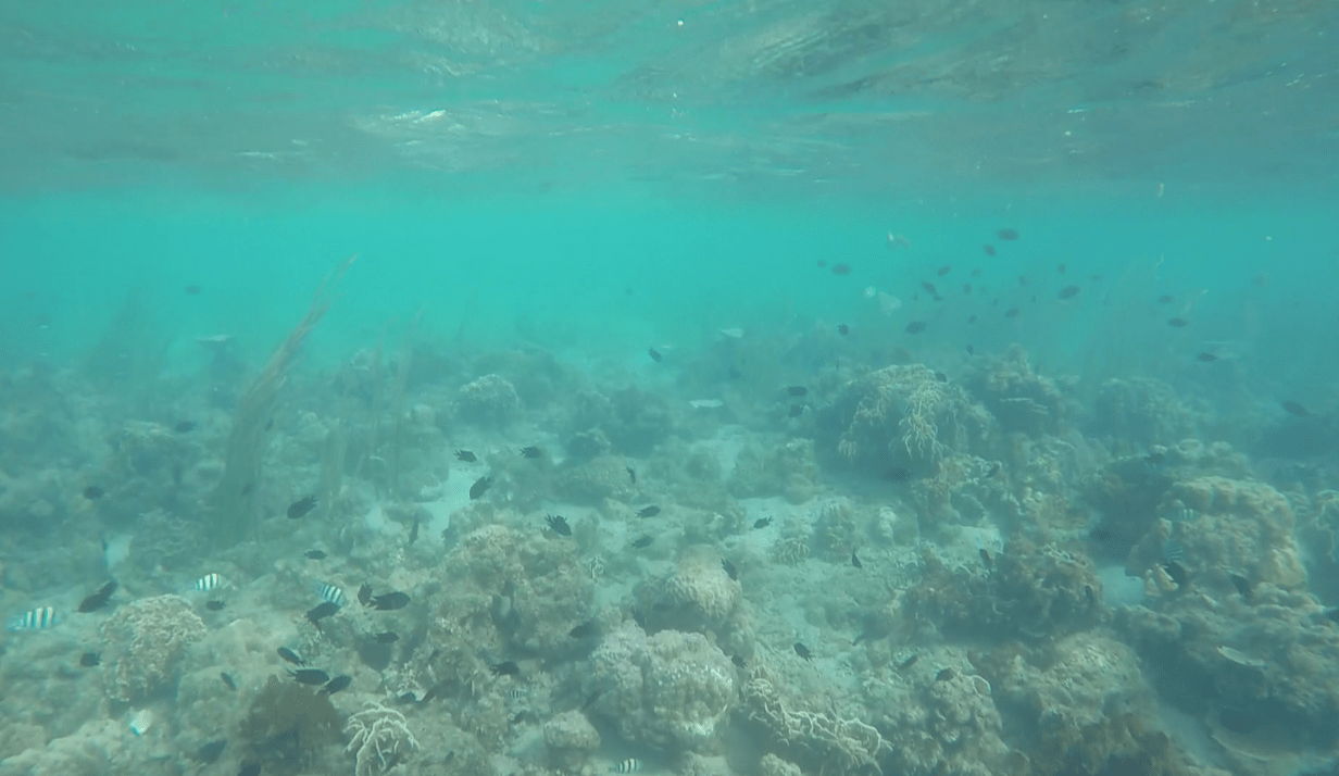 cute fishes underwater in palawan philippines honda bay