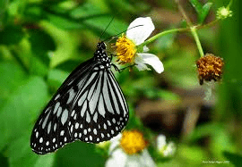 butterfly in the garden in puerto princesa palawan philippines