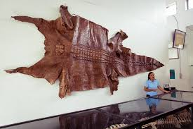 crocodile skin in Palawan Wildlife Rescue and Conservation Centre