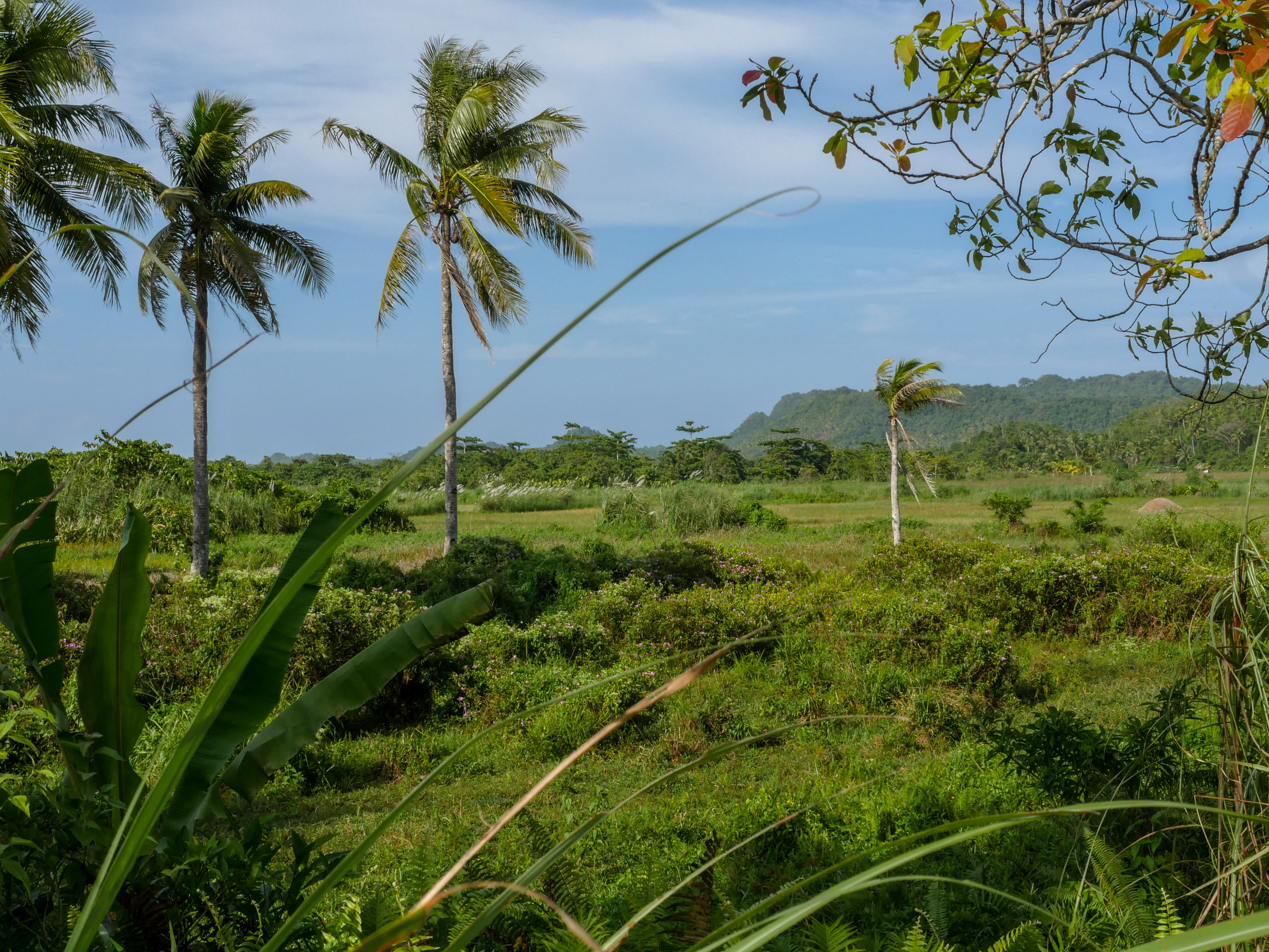 Beautiful landscape in Siargao Philippines