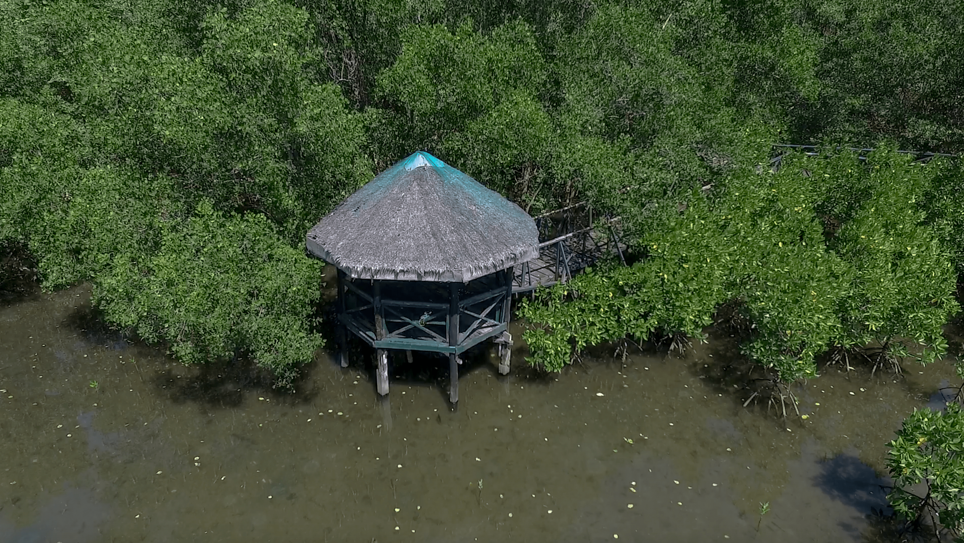 little hut at triboa bay mangrove park in subic zambales philippines