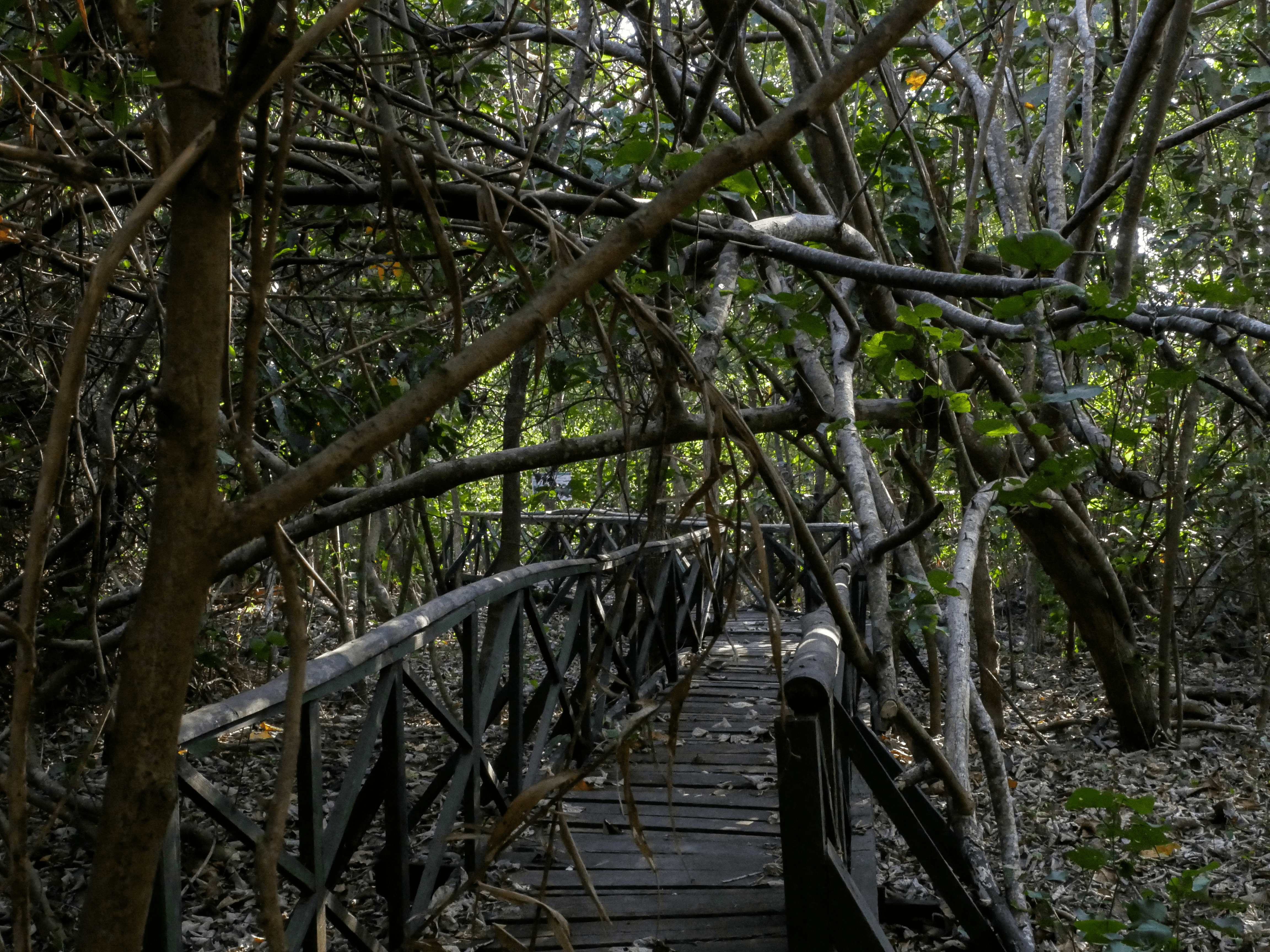 pathway in triboa bay mangrove park in subic zambales philippines