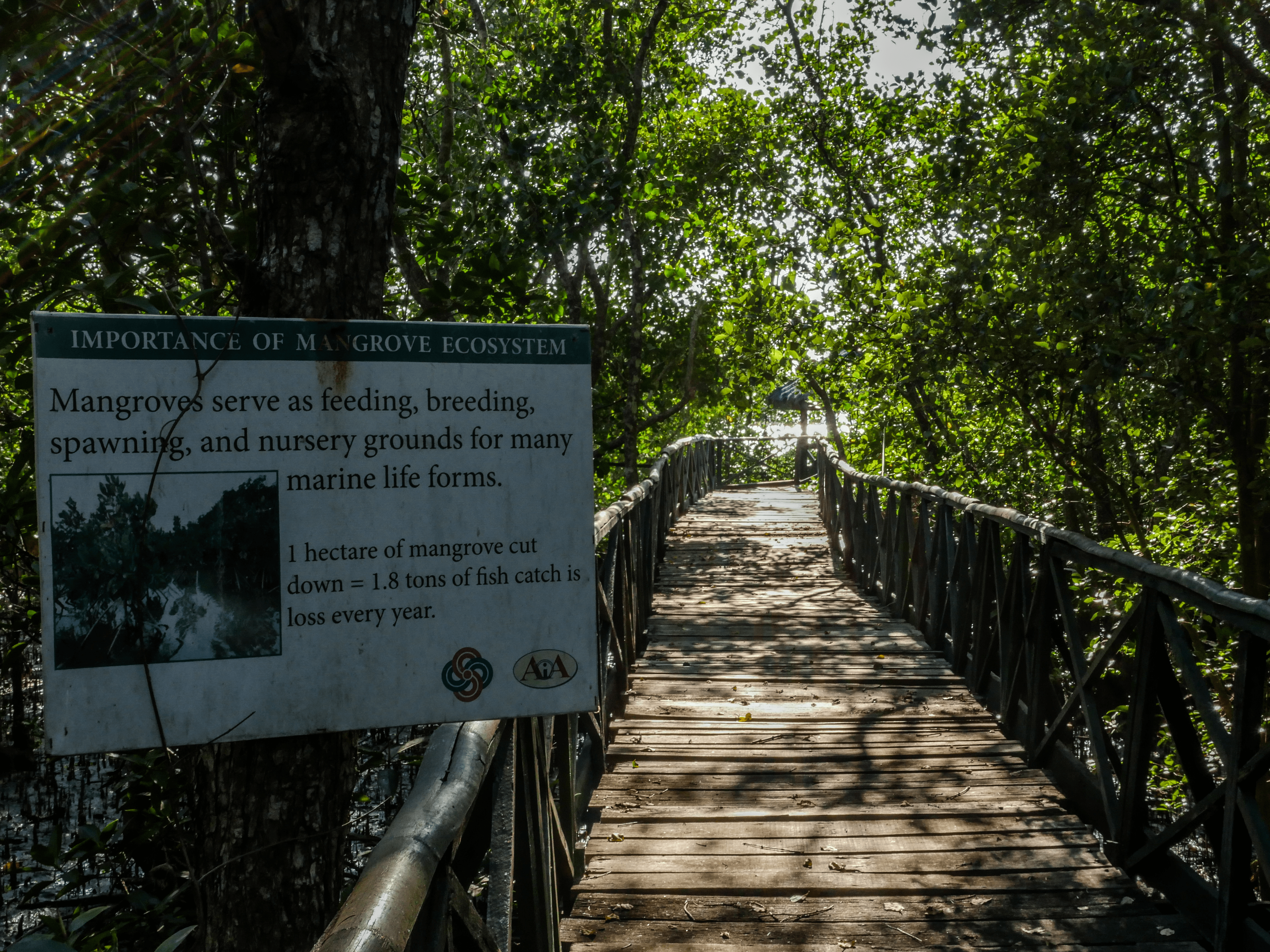 sign plat with description and pathway in triboa bay mangrove park in subic zambales philippines