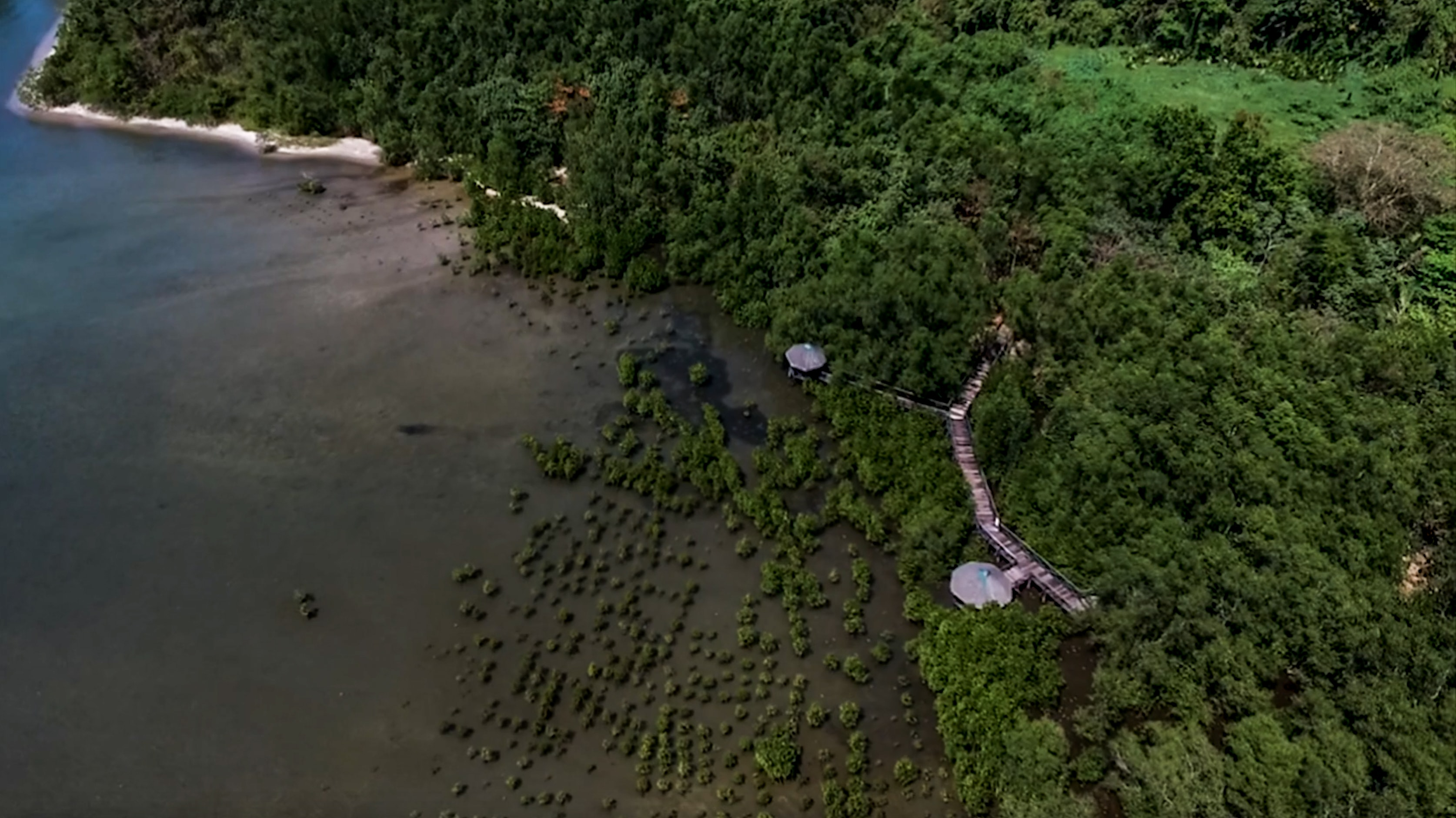 high drone shot of triboa bay mangrove park in subic zambales philippines